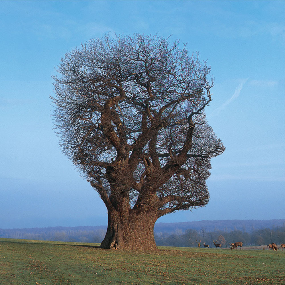 storm-thorgerson-tree-of-half-life72dpi.jpg