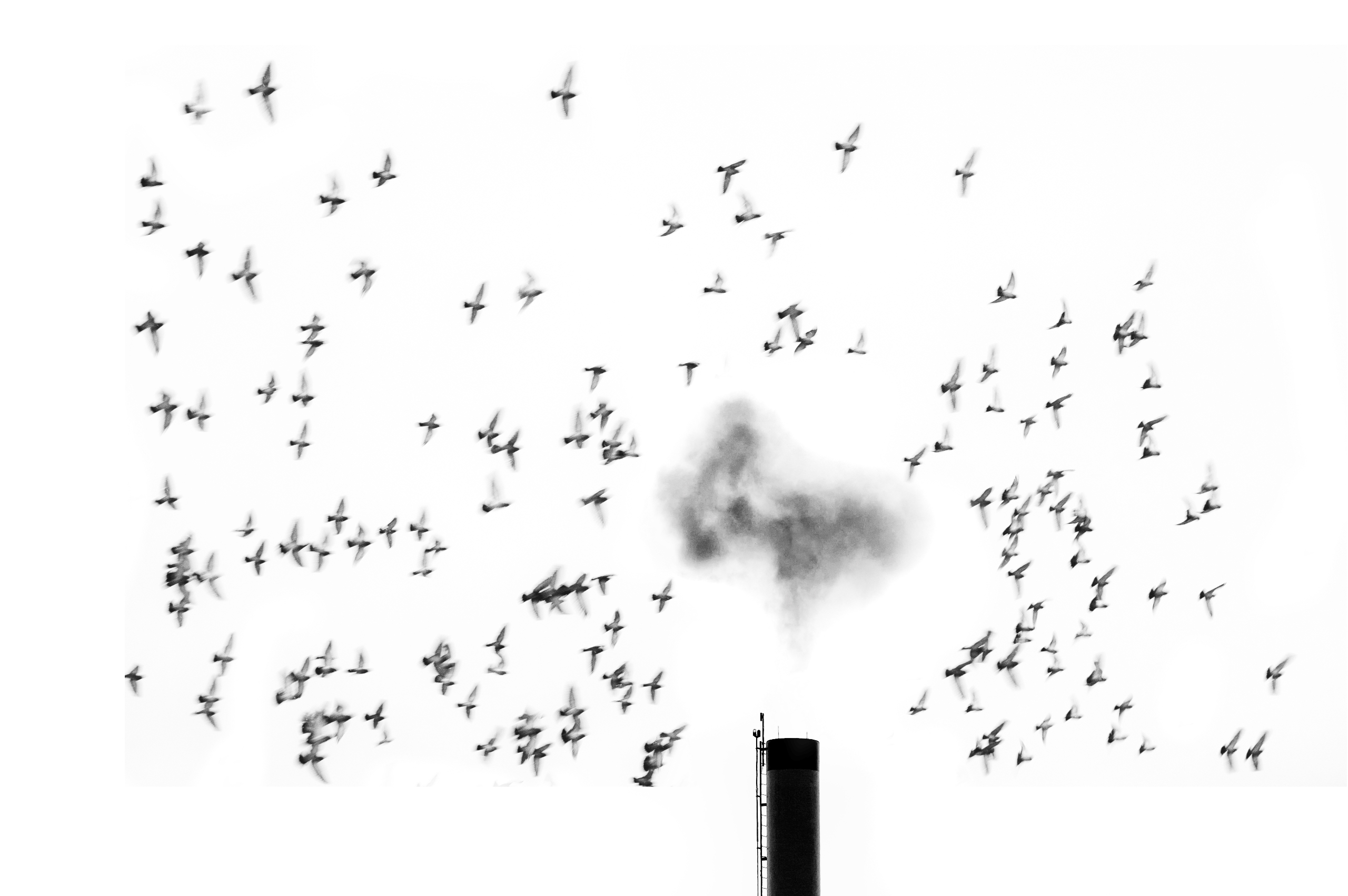 Birds Boiler - bnw, bw, blackandwhitephotography - jeff_day | ello