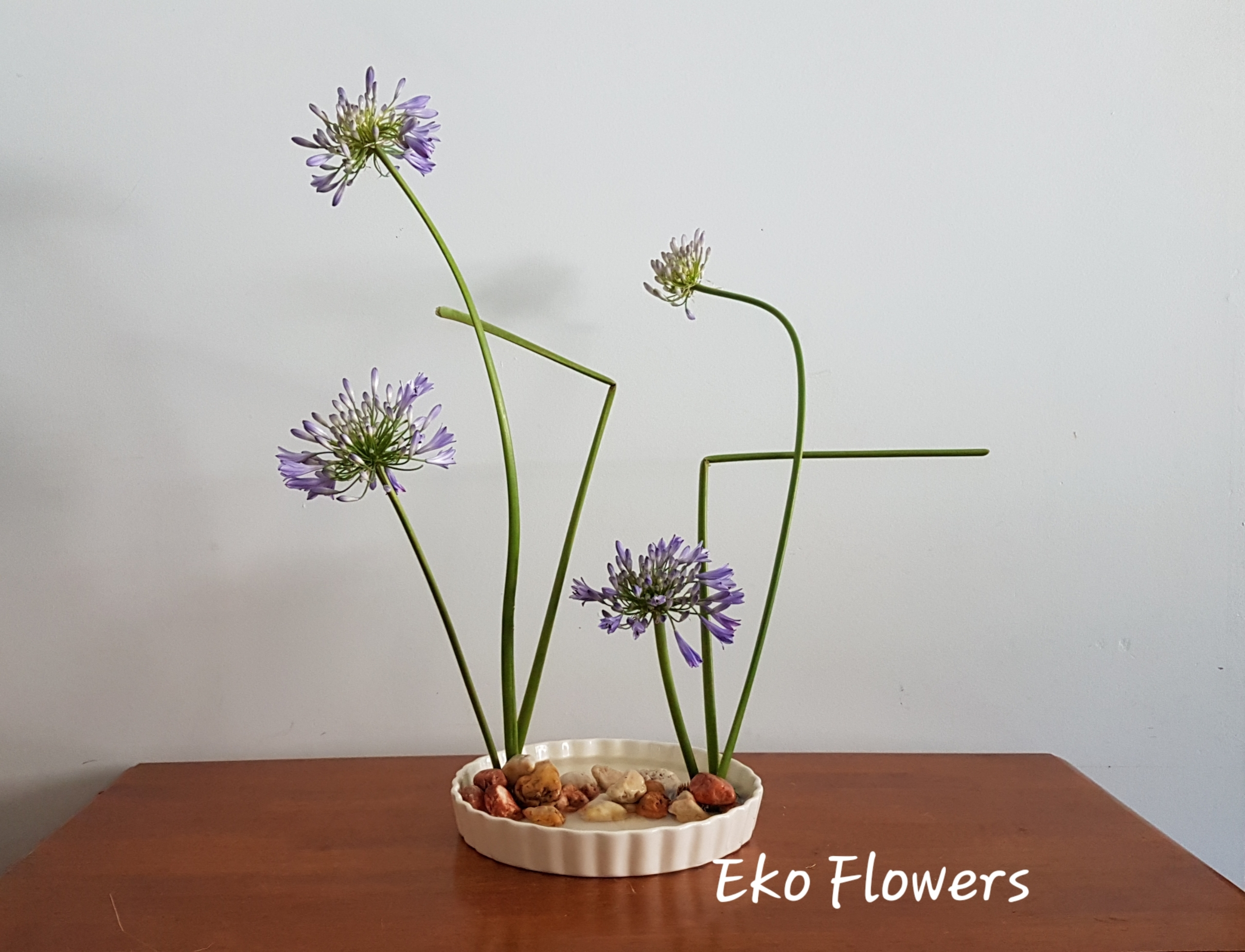 Composition today 2019 bring go - ekoflowers | ello