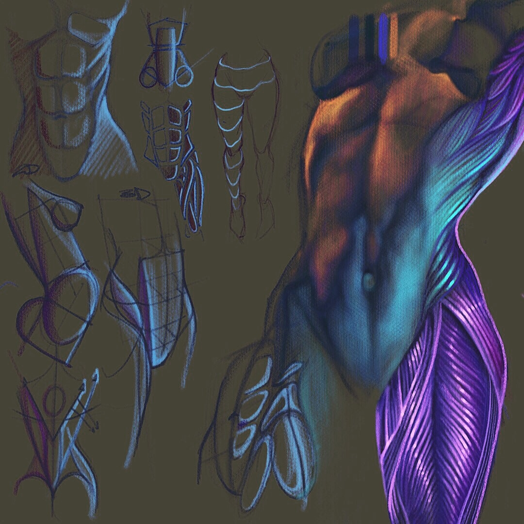 Anatomy Chalk Sketch Muscles fr - creationstationart | ello